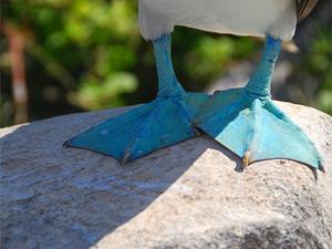 reizen ecuador vogel
