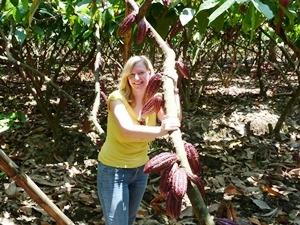 ecuador cacao plantage