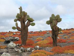 ecuador galapagos landschap