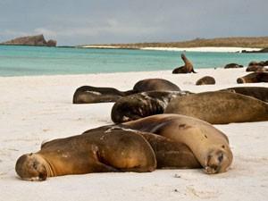ecuador-galapagos-zeehonden