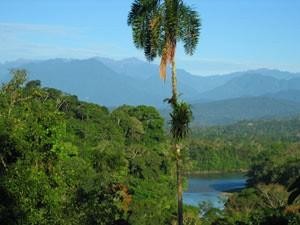 diep in amazone jungle ecuador
