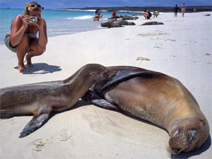beste reistijd Galapagos - zeehond