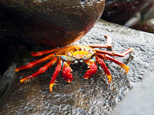 galapagos-eilandhop-krap