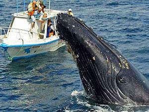 Ecuador reis Puerto Lopez walvistour