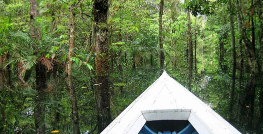 Reizen Ecuador - varen door de jungle
