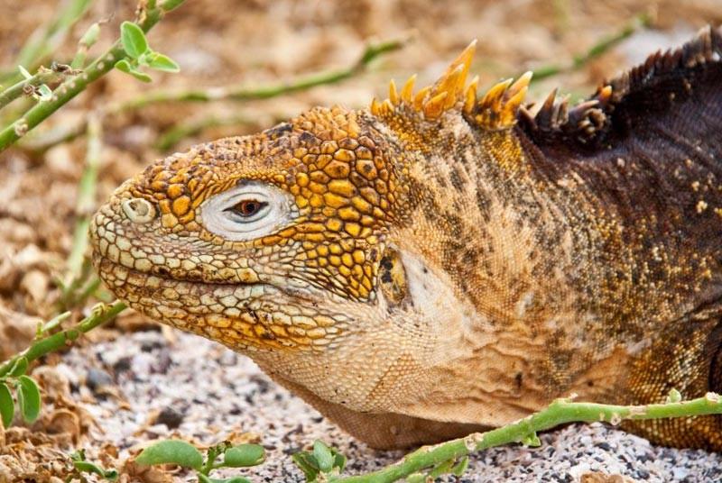 Galapagos - Ecuador rondreizen