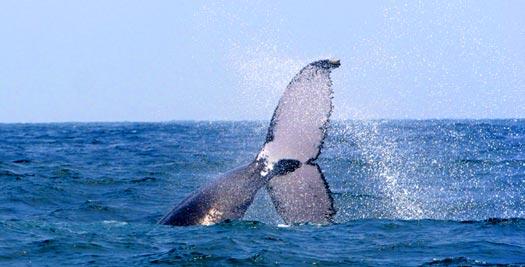 Vakantie Ecuador - walvis