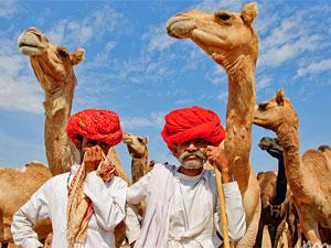 kamelen rajasthan - rondreis nepal india