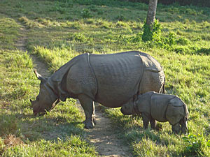Chitwan National Park neushoorns