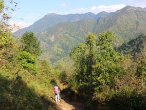 nepal reis helambu rijstveld