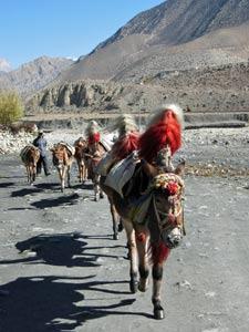 jomsom trek - individuele rondreis Nepal