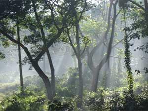 nepal reis jungle