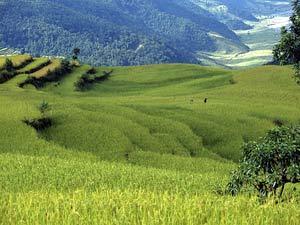 nepal reis rijst terrassen