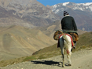 paard vervoer nepal