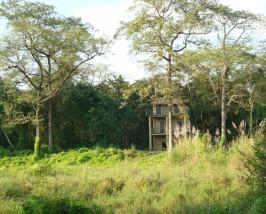 tharu chitwan jungle