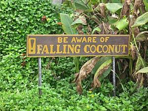 3 weken Thailand met kinderen: beware falling coconut