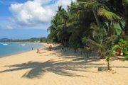 Rondreis 4: Tropische Tiener Taferelen