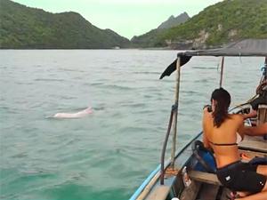 2 weken Thailand met kinderen - roze dolfijnen spotten