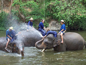 thailand kids mahout