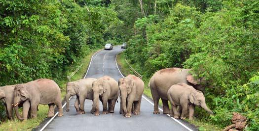 Olifanten op de weg - Thailand