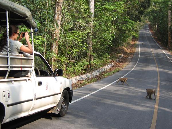 gezinsreis Thailand - safari Khao Yai