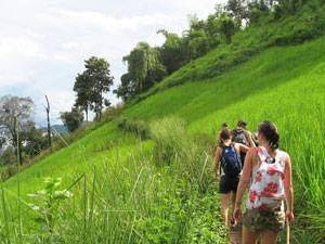trekking thailand wandelen rijstvelden