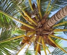 Bountybomen op koraaleiland