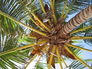 Thailand strand Ko Raya