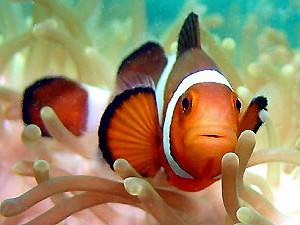 Ko Raya Zuid Thailand vis