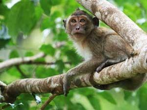 Thailand regenwoud Khao Sok