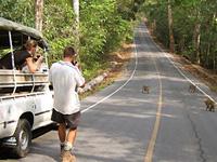 Apen spotten in natuur Thailand