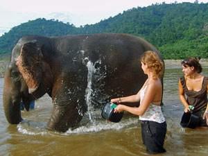 olifant wassen Thailand