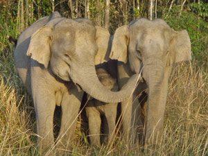 olifanten-khao-yai-rondreis-thailand