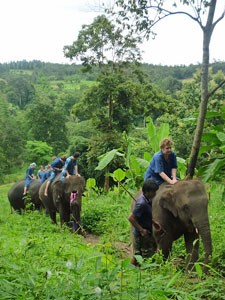 Chiang Mai olifantentocht Thailand