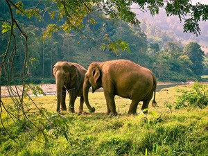 olifanten Chian Mai Thailand reis