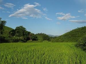 Lodge in het groen Thailand