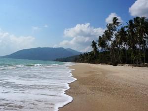 strand palmbomen Thailand
