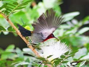 thailand reis khao sok kolibrie