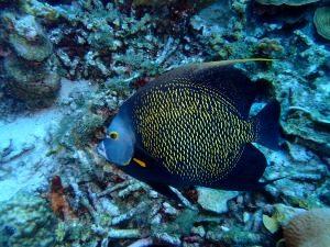 tropische vissen thailand