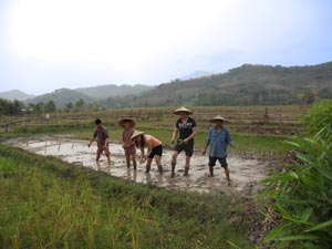 rijstvelden luang prabang laos