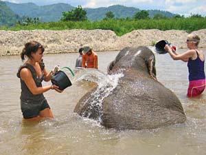 Olifantwassen Mahout Laos