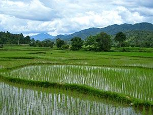 rijstveld luang prabang laos