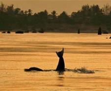 Via Dolfijnrivier naar Laos