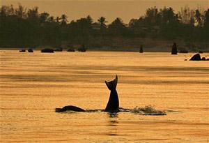 cambodja laos dolfijn mekong