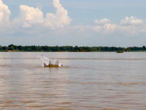 dolfijnen kratie 300x225