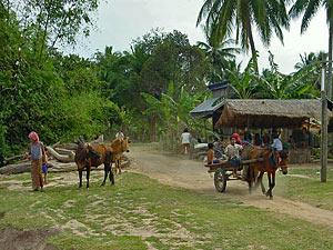 cambodja homestay