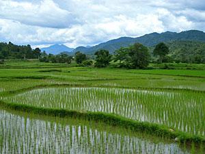 laos cambodja rijstveld