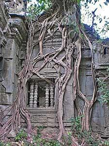 tempel jungle