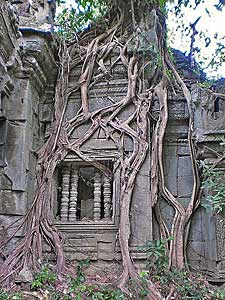 thailand cambodja tempel jungle