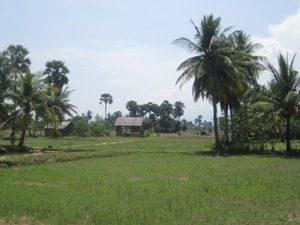 Rijstvelden Kampot, platteland kampot